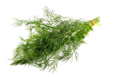 Fresh dill. Fresh green fennel isolated on white background Stock Image