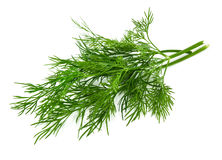Fresh dill Stock Image