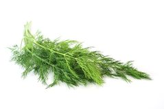 Fresh dill. Herb on a white background Royalty Free Stock Photos