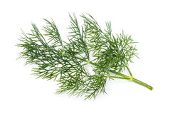 Fresh Dill Royalty Free Stock Image