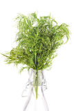 Fresh dill  in bottle isolated on white. Background Royalty Free Stock Image