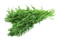 Fresh dill bunch isolated on white background Stock Photos