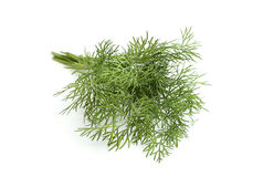 Fresh dill. Royalty Free Stock Images