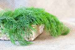 Fresh dill closeup Stock Image