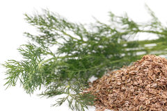 Fresh dill and dry Royalty Free Stock Images