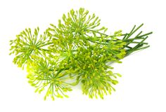 Fresh dill flower isolated on white background stock images