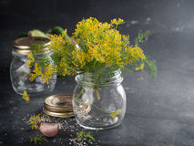 Fresh dill flower Royalty Free Stock Image