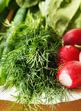Fresh dill and garden radish Stock Image