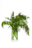 Fresh dill in a glass Stock Photos