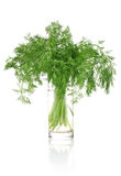 Fresh dill in glass Stock Photography