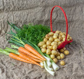 Fresh dill, green onions and potatoes with carrot front view.  Royalty Free Stock Photography