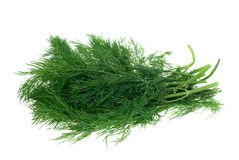 Fresh dill herb. Isolated on a white background Stock Photos