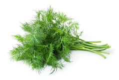 Dill isolated Stock Image