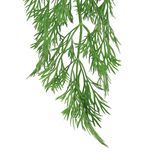 Fresh dill herb isolated Royalty Free Stock Images