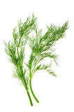 Fresh dill herb leaves. food ingredient Stock Photos