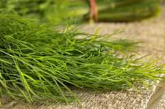 Fresh dill herbs Royalty Free Stock Images