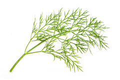 Fresh dill Stock Photography