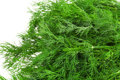 Fresh dill Stock Photos