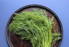 Fresh dill on an old pan Stock Images