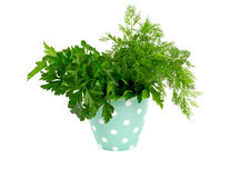 Fresh dill and parsley Royalty Free Stock Photo