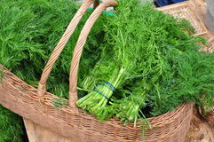 Fresh dill for sale at farmer's market. Fresh dill (anethum graveolens) in a wicker basket for sale at a farmer's market Stock Photography