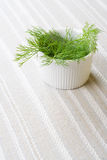 Fresh dill, still life. Fresh dill in white bowl, still life Royalty Free Stock Photography