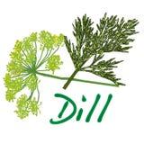 Fresh dill vector Royalty Free Stock Photos