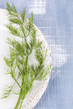 Fresh dill on vintage plate. Royalty Free Stock Images