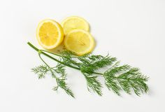 Fresh dill weed Stock Image