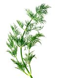 Fresh dill. On white background Stock Photography