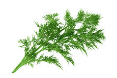 Fresh dill. Fresh dill on white background Royalty Free Stock Photos