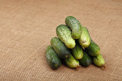 Fresh dirty cucumbers on canvas close up Royalty Free Stock Images
