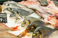 Fresh dorada fish in market stall. Fresh dorada fish close up in market stall royalty free stock image