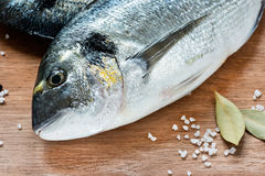 Fresh dorada fish with sea salt and bay leaf Royalty Free Stock Images