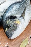 Fresh dorada fish with sea salt and bay leaf Stock Image