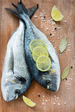 Fresh dorada fish with sea salt, lime and bay leaf Royalty Free Stock Images