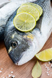Fresh dorada fish with sea salt, lime and bay leaf Royalty Free Stock Photography