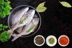 Fresh doradeo fish isolated on white background. Raw  fresh Dorado fish isolated on white background Stock Photography