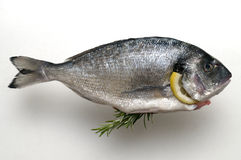 Fresh dorado fish Royalty Free Stock Image