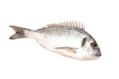 Fresh dorado fish. Isolated on white background Royalty Free Stock Images