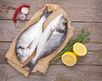 Fresh dorado fish cooking with spices and condiments Royalty Free Stock Photo