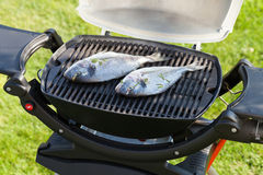 Fresh dorado fish grill cooking Stock Images