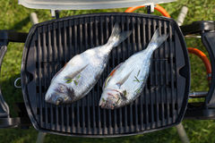 Fresh dorado fish grill cooking Royalty Free Stock Images