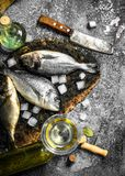Fresh Dorado fish with ice cubes and wine glass. On a rustic background Royalty Free Stock Photography