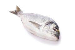 Fresh dorado fish. Isolated on white background Stock Photography