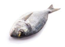 Fresh dorado fish. Isolated on white background Royalty Free Stock Photo