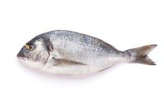 Fresh dorado fish. Isolated on white background Stock Images