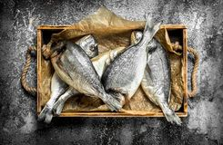 Fresh Dorado fish on an old tray. On a rustic background Stock Image