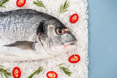 Fresh Dorado fish with rosemary and chili pepper on a salt cushi Stock Photography