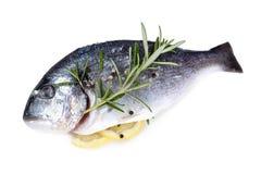 Fresh dorado fish Stock Photos